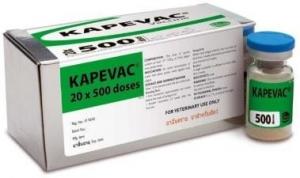СЕВАК KAPEVAC